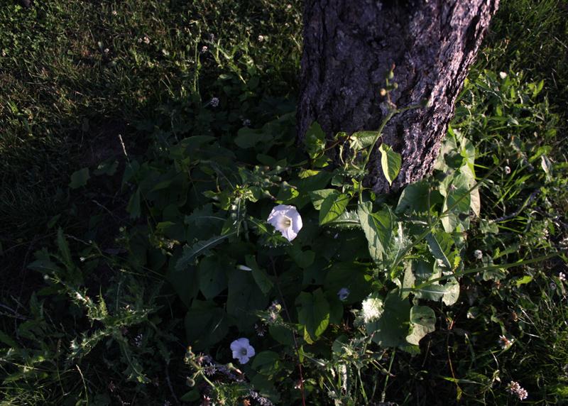 Kätketty kukka