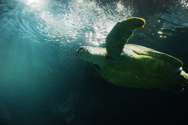 Be a turtle. Like a boss.